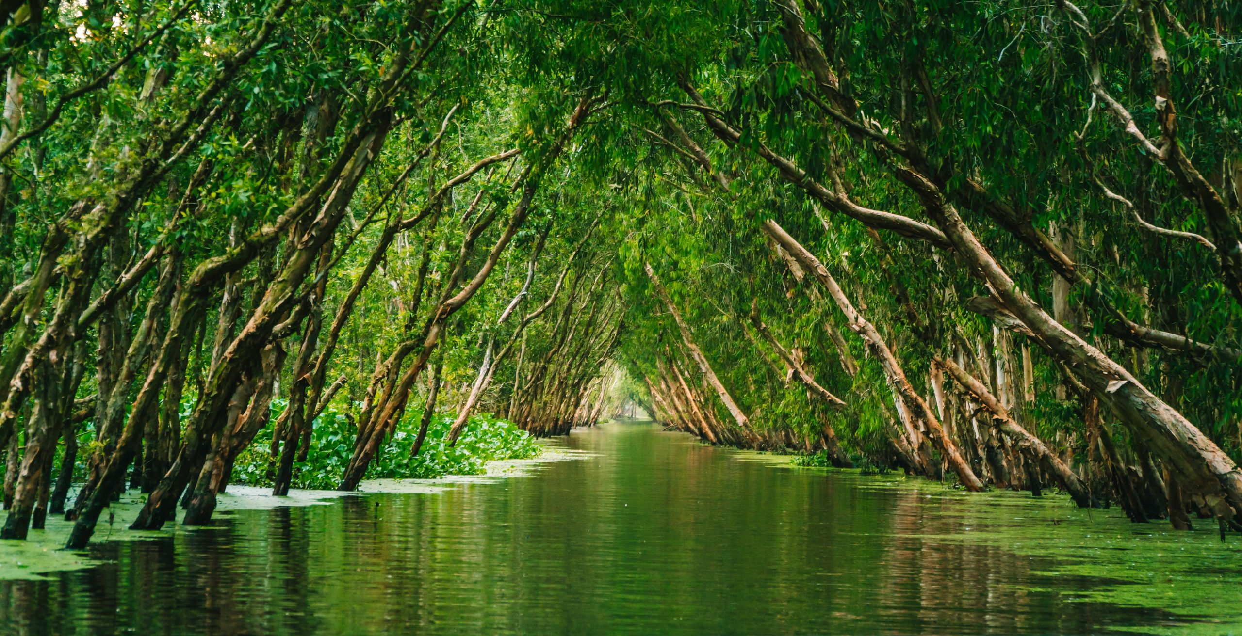 regnskogen-2020